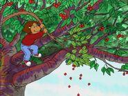 The Cherry Tree 123