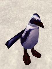 Augmented Penguin Live.jpg