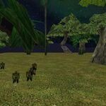 Savao Island Live 5.jpg