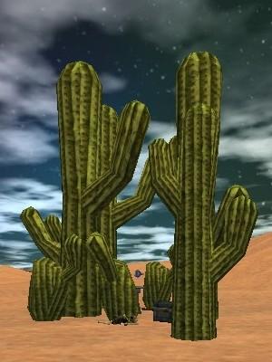 21.6S, 9.7E - Cactus Stand