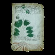 ACIV Folio 34r