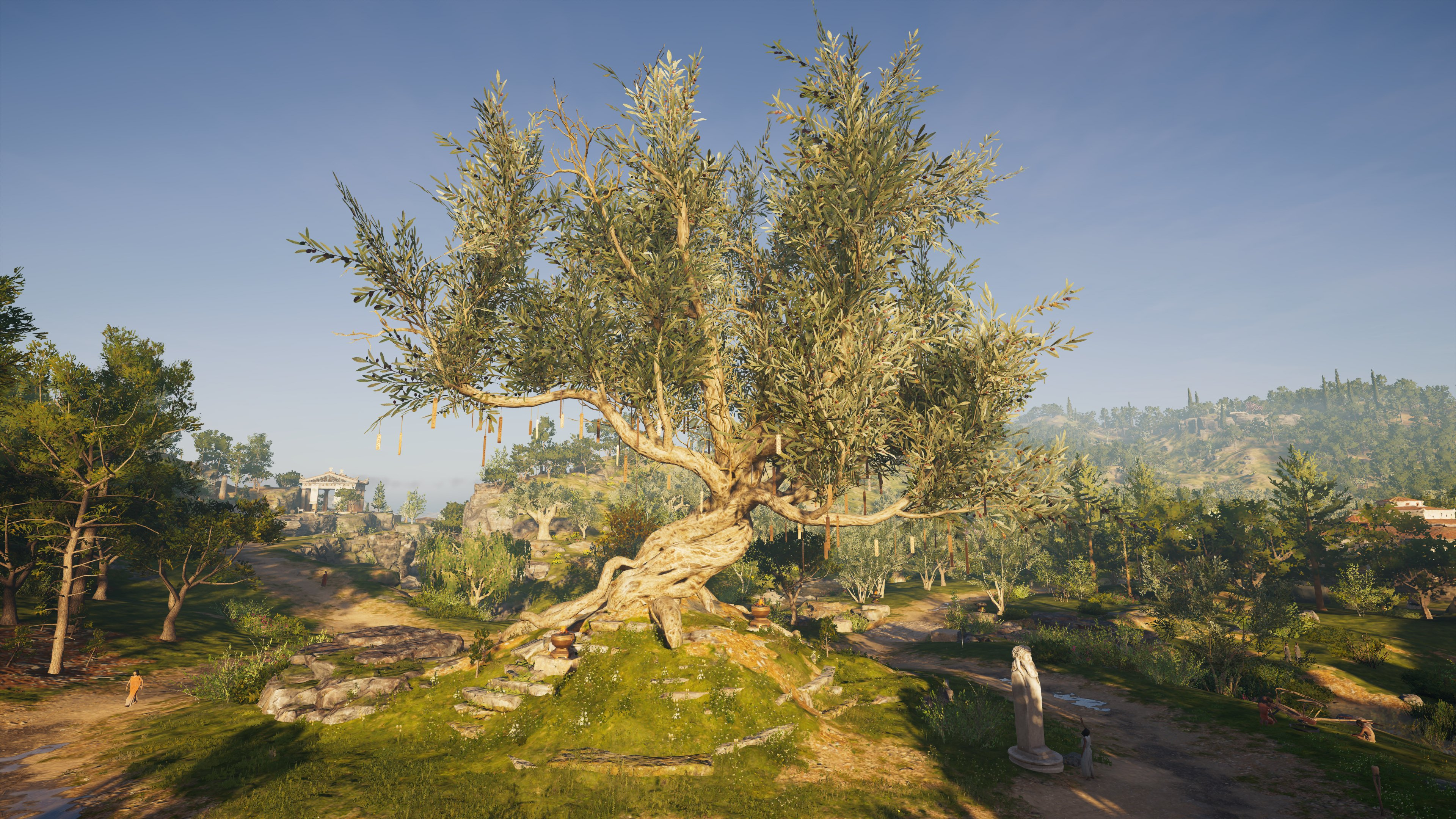 Olive Tree of Herakles