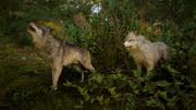 ACV Wolves