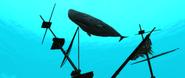 ACIV cachalot sous marin