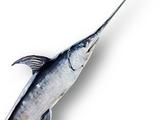 Swordfish (great sword)