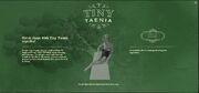 Search Engine - Tiny Taenia