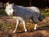 Dwolfg