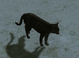 Kot w Assassin's Creed III