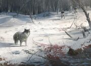 AC3 Wolves