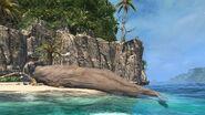 Baleine blanche Scaffel