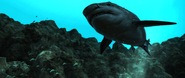 ACIV requin sous marin