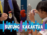 The Cockatoo / Burung Kakak Tua