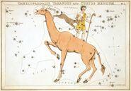 Sidney Hall - Urania's Mirror - Camelopardalis, Tarandus and Custos Messium