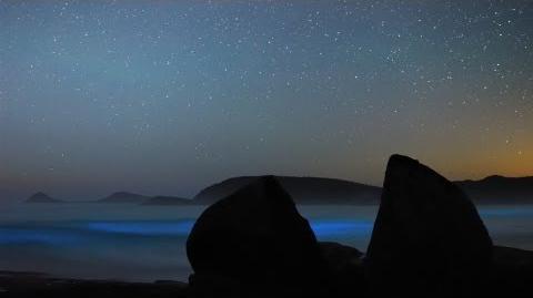 Liquid Light Show (Aurora and Bioluminescence)