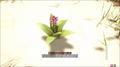 Turmericplant.png