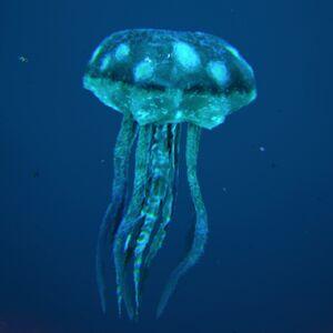Jellyfish Image.jpg