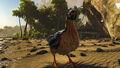 Chicken Image.jpg