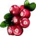 Lignonberry.png
