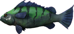 Sea Bass.png
