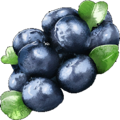 Bilberry.png