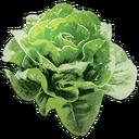 Edible Greens.png