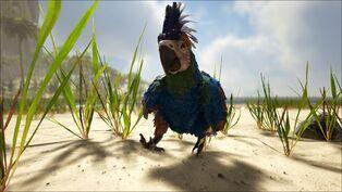 Parrot Image.jpg