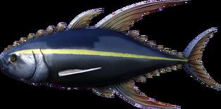 Tuna.png