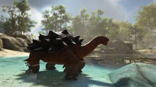 Turtle Image.jpg