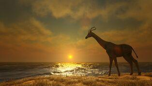 Giraffe Image.jpg