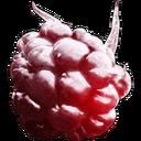 Arctic Raspberry.png