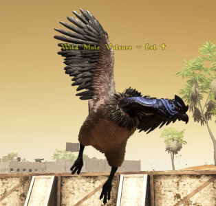 Vulture Image.jpg