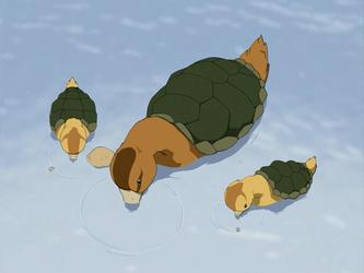 Canard-tortue