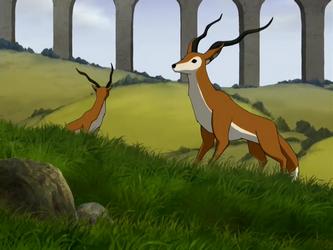 Antilope-renard