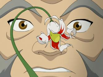 Arbusto jade branco