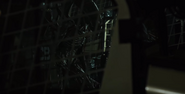 Xeno in cargo hold