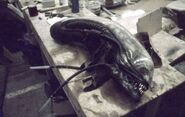 Alienheadbts