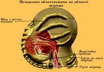 Ксеноморф Лицехват02