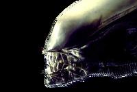 Do you like my Alien?