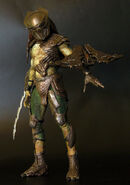 Falconer predator