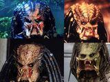 Predator biológia