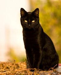 Elizabeth 'Liz' Diggsby as a cat