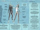 Othoth