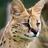 Azure the Serval's avatar