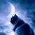 Kitty Moonlight