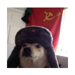 The cool meme doggo's avatar