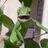 BtwIlikeJoJo's avatar