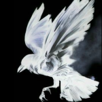SilverFlight's avatar