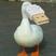 AgentParadox's avatar
