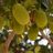 Jackfruitgame's avatar