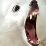 Memebigboy4's avatar